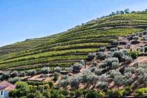 Vignes du Douro - Vin Porto